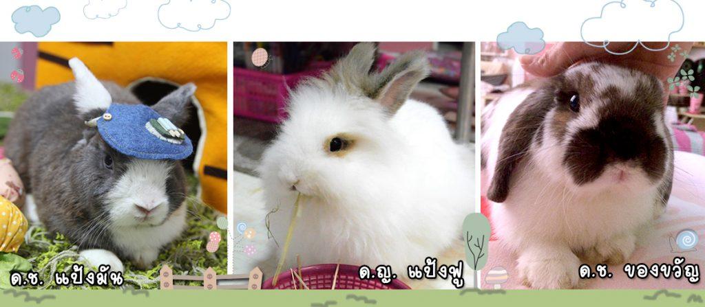 รูปกระต่ายต้นแบบที่นำมาออกแบบลายปัก Rabbit is Love by Jeabja Fufu